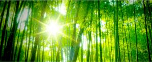 Bambou, choix écologique ?
