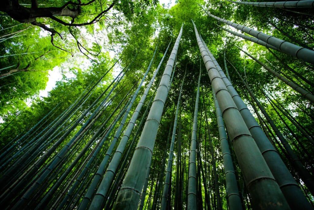 Le bambou, un choix écologique