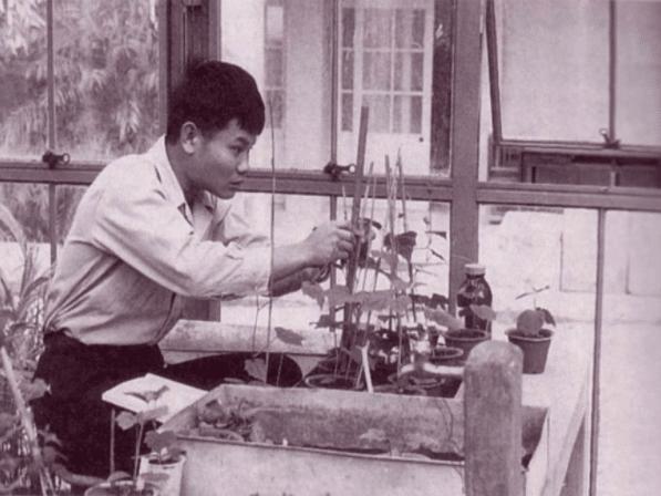 Teruo Higa et ses recherches pour la purification de l'eau