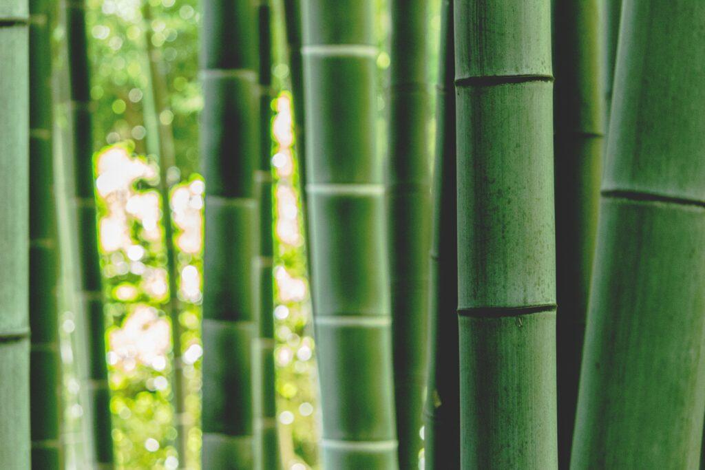 Fabrication du Takesumi grâce au bambou