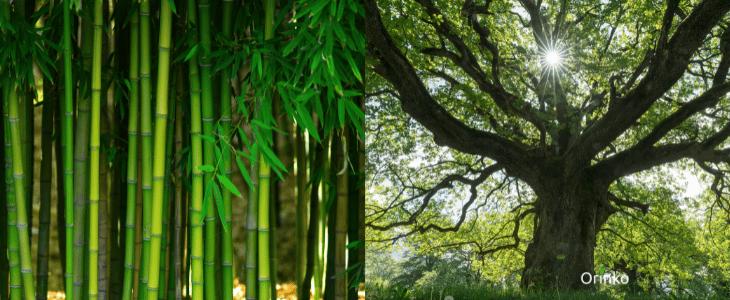 Les différences entre le binchotan et le takesumi